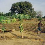 jardins de semaga